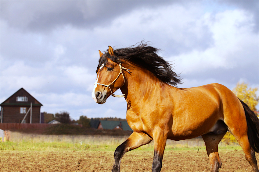 Feeding for Weight Gain - FeedXL Horse Nutrition Calculator