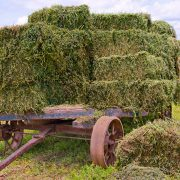 Hay for horses on a wagon in a field