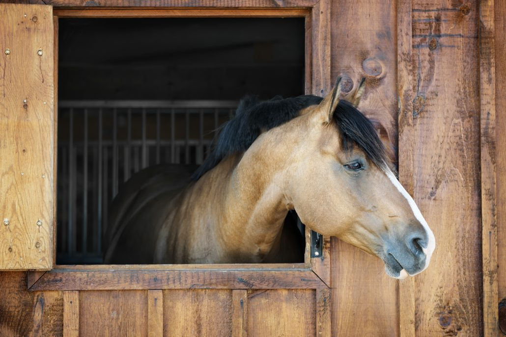 How to Feed a Horse Confined to a Stable