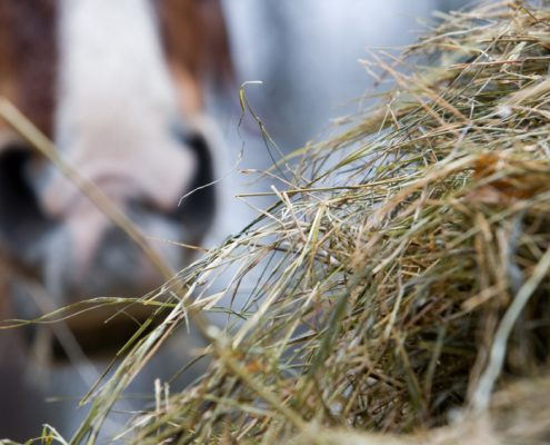 Hay and horse in the background