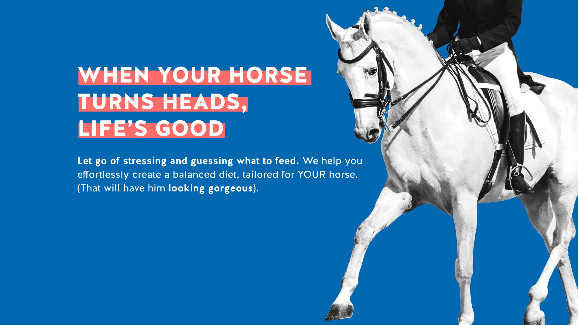 FeedXL promotion showing rider on a black horse.