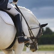 a healthy well fed dressage horse out for a ride