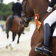 Award winning dressage horse